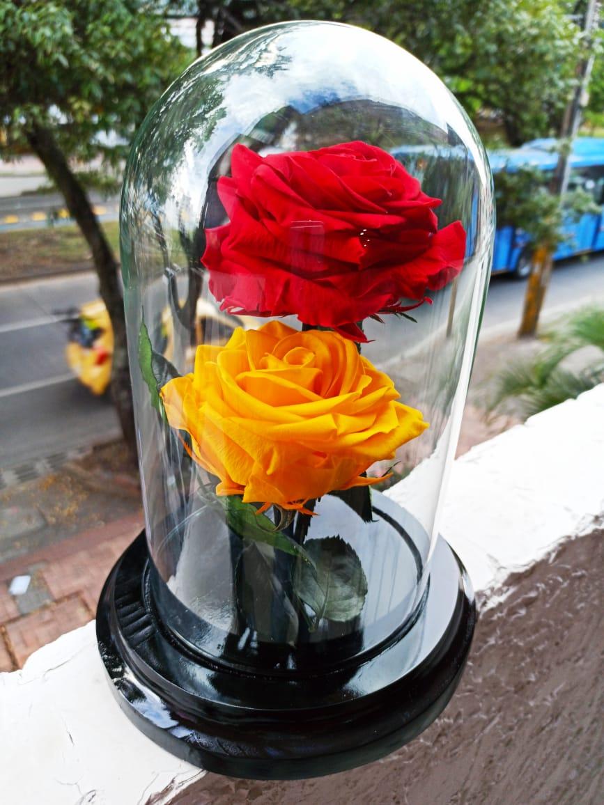 Rosa Preservada Amarilla Y Roja Flor Miel Flor Miel